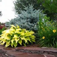 пример использования красивых растений в ландшафтном дизайне дачи фото