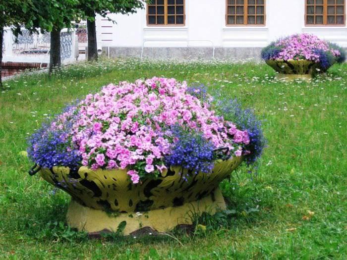 пример применения необычных растений в ландшафтном дизайне дома