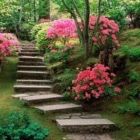 идея использования светлых растений в ландшафтном дизайне дачи картинка