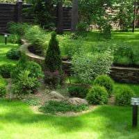 вариант применения красивых растений в ландшафтном дизайне дачи картинка