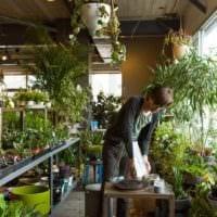 идея использования светлых идей оформления зимнего сада в доме фото