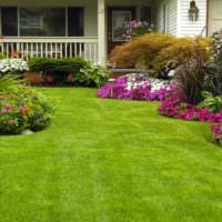 пример красивого декора огорода на даче картинка