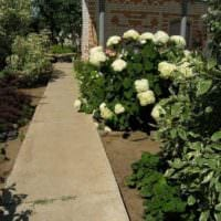 вариант применения красивых садовых дорожек в дизайне двора картинка