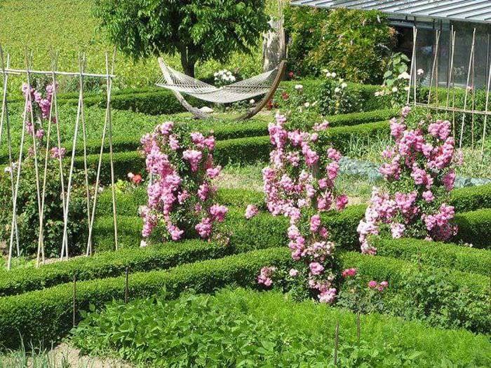 пример использования необычных роз в ландшафтном дизайне