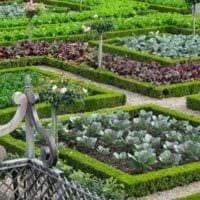 вариант яркого декора огорода на даче фото