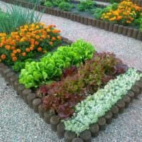 пример светлого дизайна огорода на даче фото