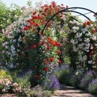 идея использования светлых роз в ландшафтном дизайне картинка