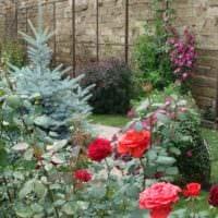 идея применения необычных роз в дизайне двора фото