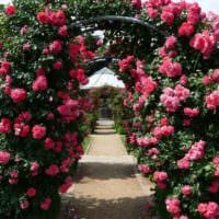 пример применения ярких роз в дизайне двора фото