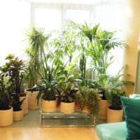 идея использования красивых идей оформления зимнего сада фото