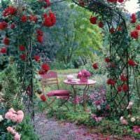 пример применения светлых роз в дизайне двора картинка