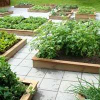 пример красивого дизайна огорода в частном дворе картинка