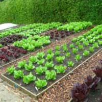 идея светлого декора огорода в частном дворе картинка