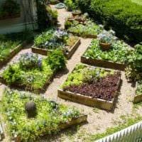 пример яркого дизайна огорода в частном дворе картинка