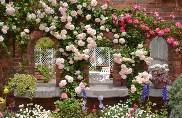 вариант применения необычных роз в дизайне двора