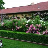вариант использования красивых роз в ландшафтном дизайне фото