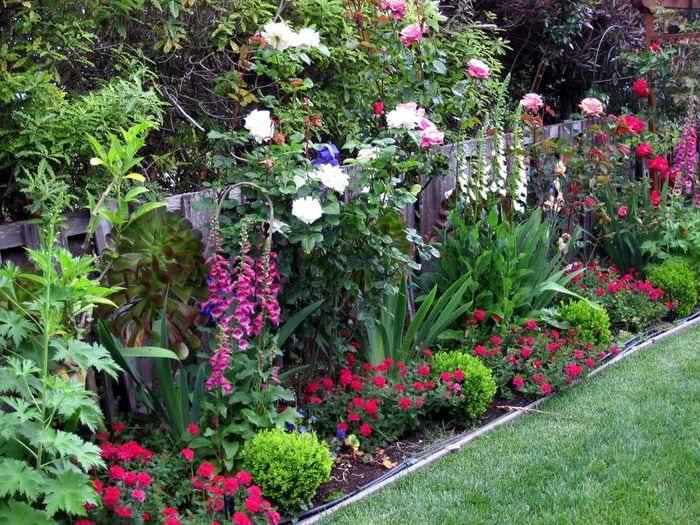 идея использования светлых роз в ландшафтном дизайне