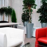 вариант применения ярких идей оформления зимнего сада в доме фото