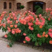 пример использования светлых роз в дизайне двора картинка