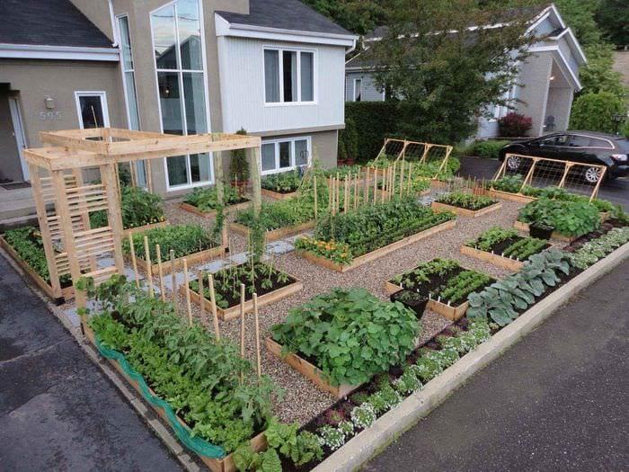 идея яркого дизайна огорода в частном дворе