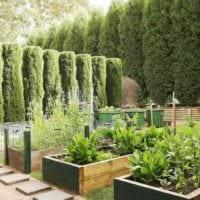 идея светлого дизайна огорода на даче картинка
