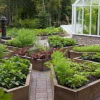 пример яркого дизайна огорода на даче картинка