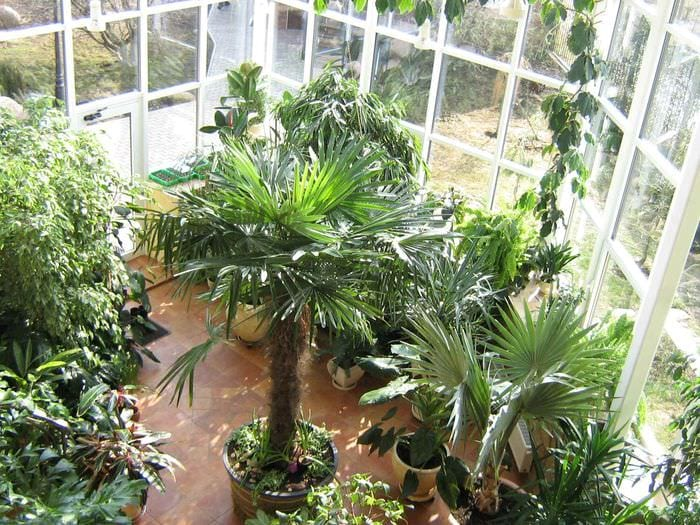 пример использования красивых идей оформления зимнего сада