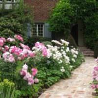 вариант использования светлых роз в дизайне двора фото