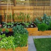 вариант необычного декора огорода на даче фото