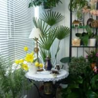 вариант использования светлых идей оформления зимнего сада в доме фото