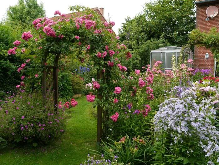 пример применения ярких роз в дизайне двора