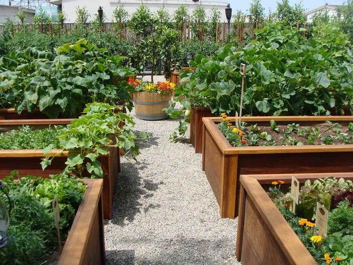 идея светлого дизайна огорода на даче