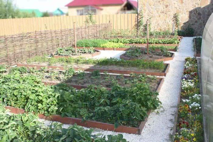 вариант яркого дизайна огорода в частном дворе