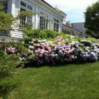 вариант яркого декора палисадника в частном дворе картинка