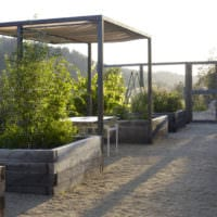огород с грядками дача фото
