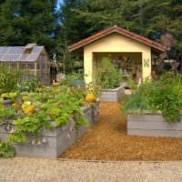 огород с грядками дача идеи фото
