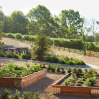 огород с грядками дизайн фото