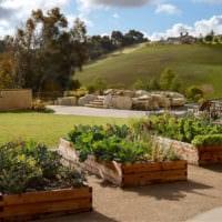 огород с грядками фото