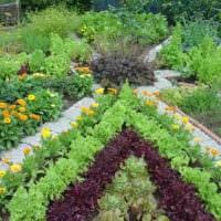 огород с грядками на даче