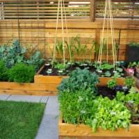 огород с грядками на даче дизайн