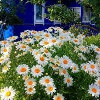 садовый участок 4 сотки фото дизайн