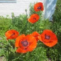 садовый участок 4 сотки фото дизайна