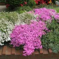 садовый участок 4 сотки тонкости ландшафтного дизайна варианты декора