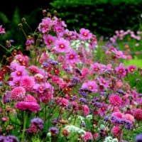 садовый участок 4 сотки тонкости ландшафтного дизайна цветы