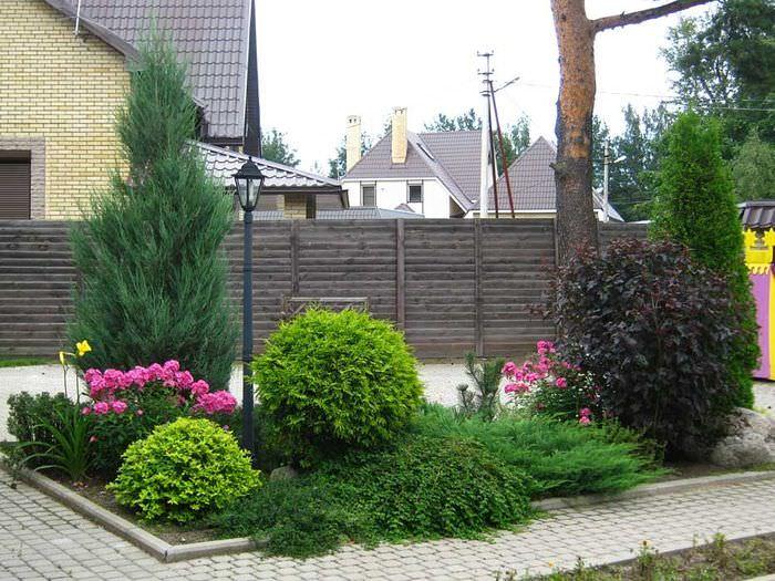 Клумба в саду из хвойных растений