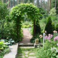 Арка с вьющимися растениями в ландшафте сада