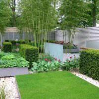 Живые изгороди и бамбук в саду