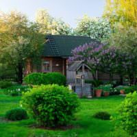 Сад со старым колодцем