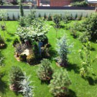 Молодые растения в садовом ландшафте