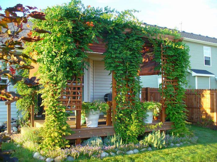 Открытая терраса с вьющимися растениями